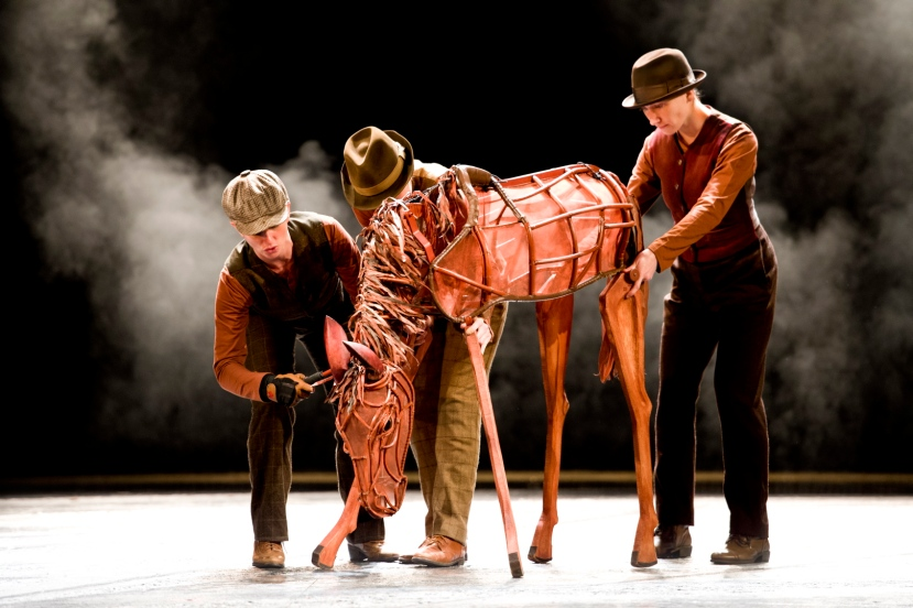War Horse Australia young Joey