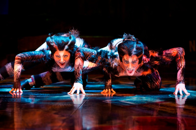 Cats 2015 Australia, crouching cats